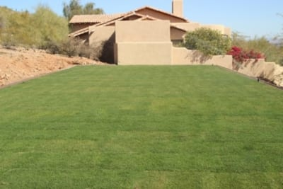 Residential Project in Paradise Valley - After Landscape renovation. Congleton Sod Install - Final