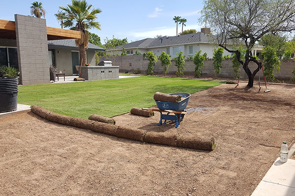 Sod and Plant Installation at Southwest Lawn Sprinkling Specialists in Phoenix, Arizona